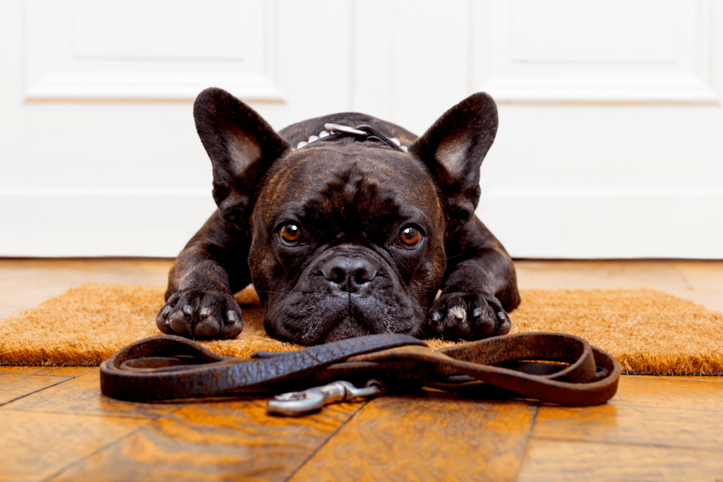 Train a dog with a collar - GRINFER